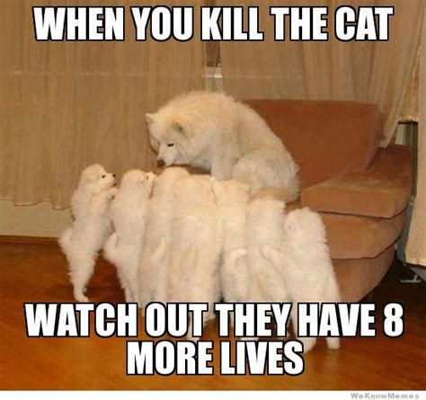 Dog Cat Meme - cat vs dog meme make your own storytelling dog meme here