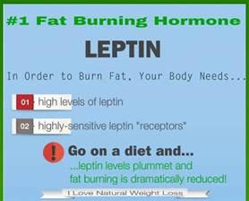 image gallery lipton foods