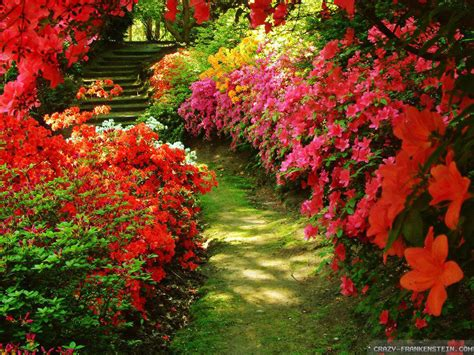 flowers for backyard red flowers for garden 20 cool hd wallpaper hdflowerwallpaper com