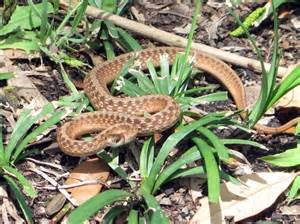 ridding your garden of snakes tips on how to get rid of