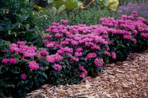 flowering evergreen shrubs full sun www pixshark com images galleries with a bite