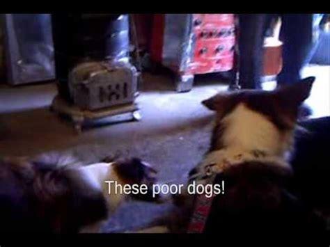 underground banned illegal underground dog fighting youtube