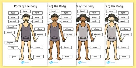 public area in body parts parts of the body a4 eyes nose mouth back display