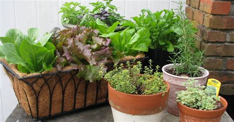 fall container gardening vegetables desperate gardener easy container gardening combining