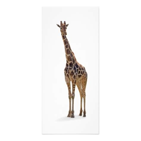printable giraffe bookmarks giraffe bookmark rackcard rack cards zazzle