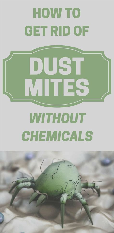 how to get rid of dust mites in bed 1047 best house cleaning images on pinterest cleaning
