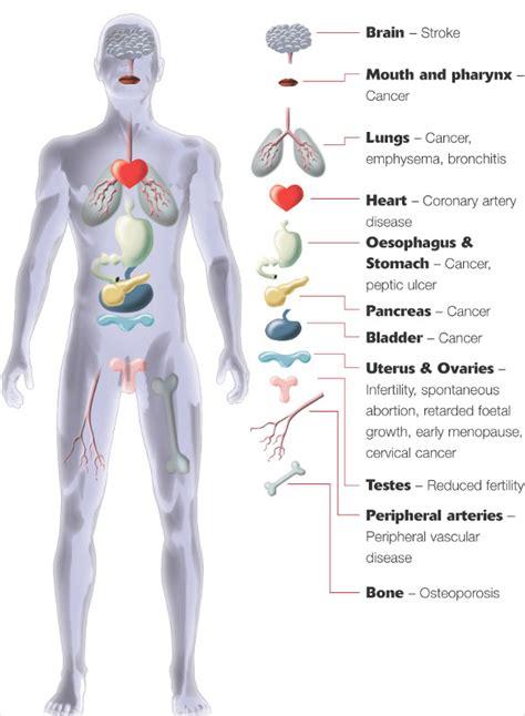 body diagram  printable