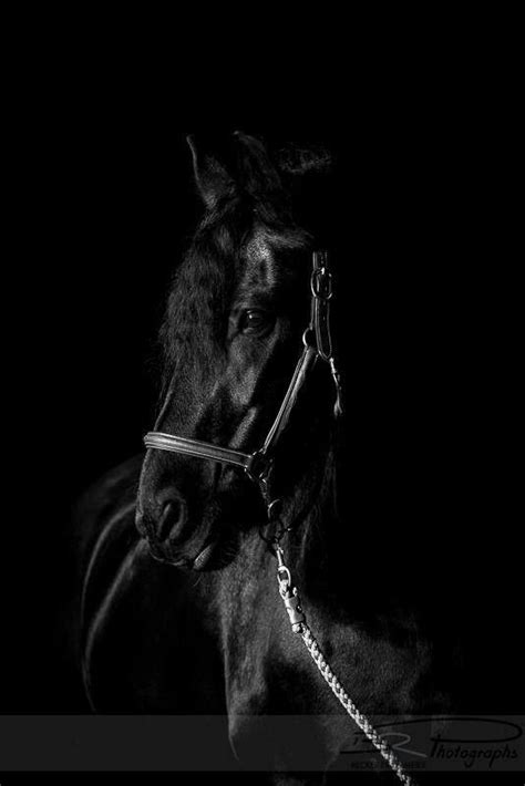 Friesian horse stallion black baroque | Horses, Black