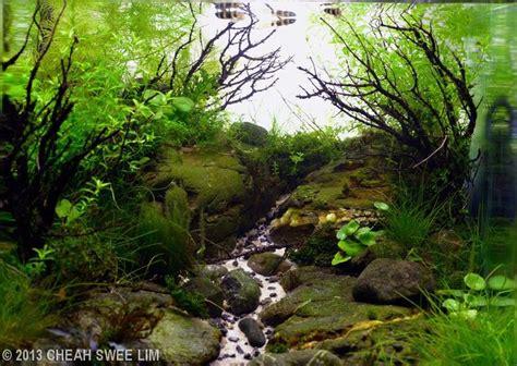 aga aquascape 1000 ideas about aquascaping on pinterest aquarium freshwater aquarium and live