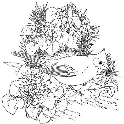 coloring pages of birds for adults hard bird coloring pages for adults enjoy coloring