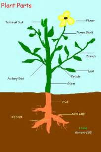 Flowers In Killeen - plant information amp vocabulary science pinterest