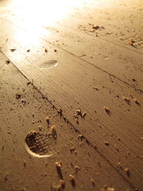 Distressed Wood Floors Dogs - innovative distressed wood floor refinishing for wood floor