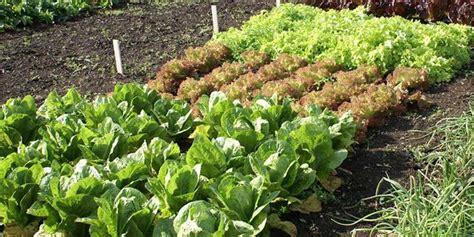 organic vegetable gardening supplies vegetable gardening
