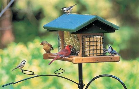 Backyard Feeders by Birds Unlimited How To Keep Birds Healthy
