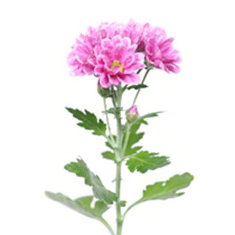 imagenes de flores y arboles flores plantas y 225 rboles para tiendas retif