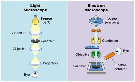 name one advantage of light microscopes over electron microscopes what are the differences between light and electron