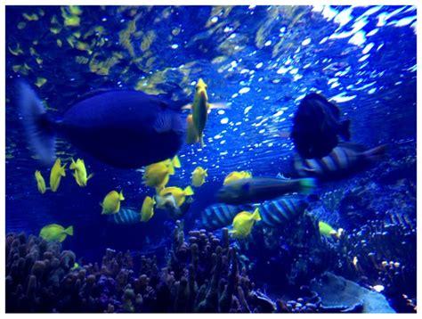 ocean design aquarium reviews maui ocean center 1447 photos 541 reviews aquariums