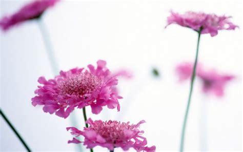 Ransel Vb Flower 911 صور ورود رومانسيه خلفيات ورد وزهور طبيعية صور زهور للتصميم flowers photos