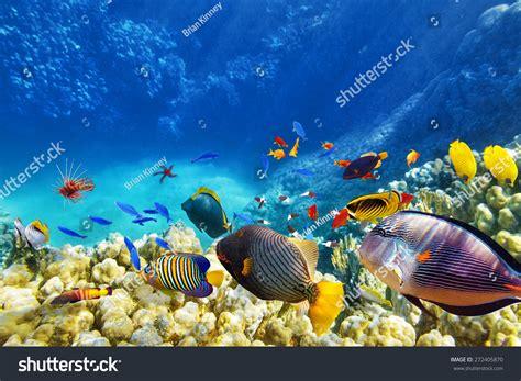 wonderful  beautiful underwater world  corals