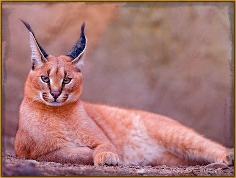 imagenes geniales de gatos imagenes animadas de gatos para descargar archivos fotos