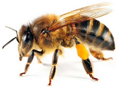 bee pictures kids search