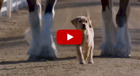 budweiser puppy budweiser puppy commercial www imgkid the image kid has it