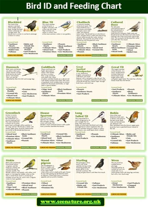 what do birds eat see nature observing nature in your
