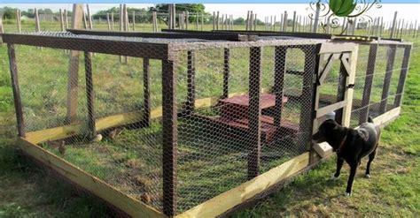 raising quail backyard 1000 ideas about raising quail on pinterest quail coop
