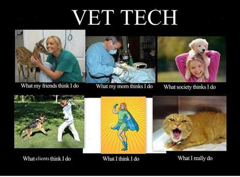 Vet Memes - funny vet tech quotes quotesgram
