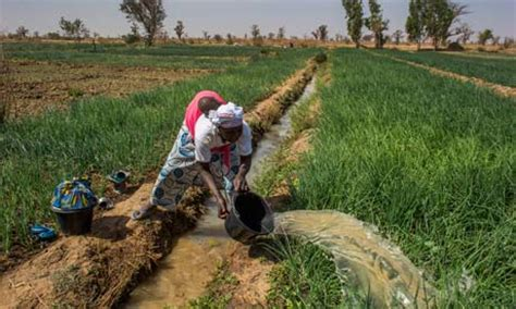 irrigation  thoughts  sustainable water