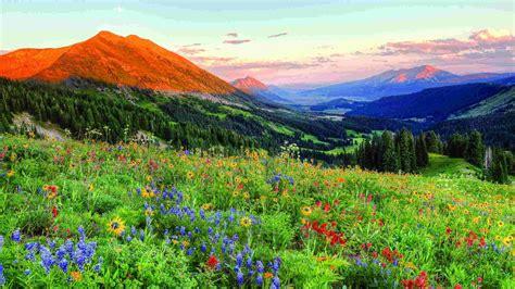 crested butte colorado wild spring flowers landscape
