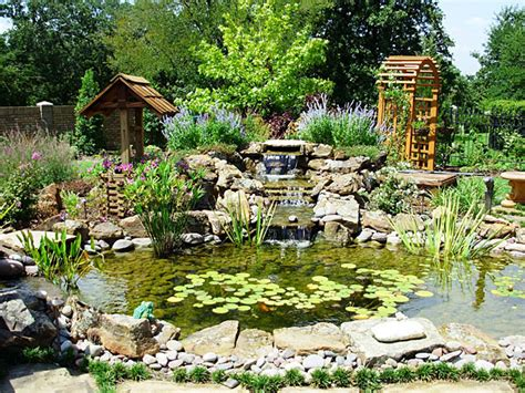 backyard coy ponds koi ponds gallery sublime water garden