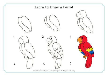 drawing birds learn to 1600583407 learn to draw a parrot how to draw learning drawing practice and drawings