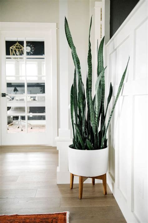 home interior plants best 25 plant stands ideas on modern indoor