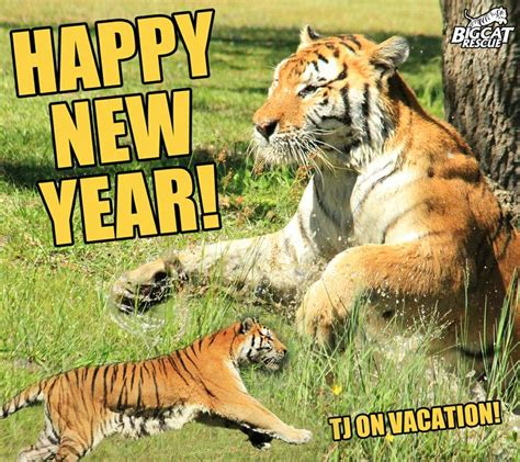 new year tiger tiger new year 28 images happy new year tiger by