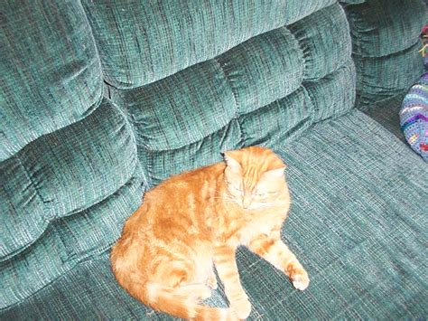tigger on the couch deeboman