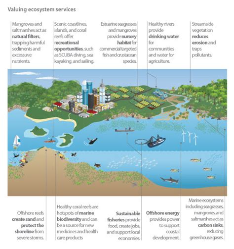 ecosystem diagram march 2013 introduction to environmental policy