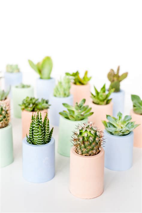 mini succulent planters how to color plaster with this secret ingredient diy