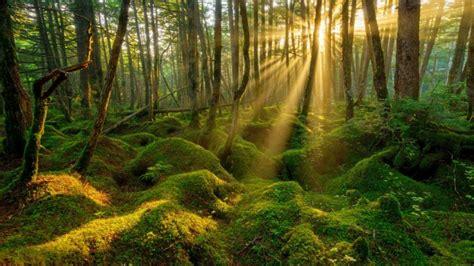 imagenes hd bosques musgo amanecer bosque fondos de pantalla hd fondos de