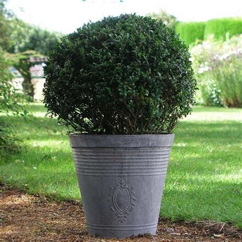 Zinc Garden Planters by Buy Zinc Embossed Planter The Worm That Turned