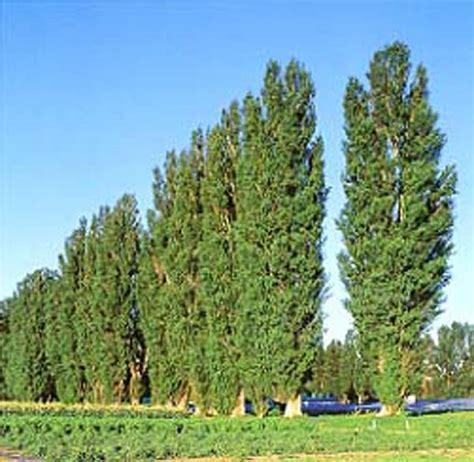 popular trees just a lil awards