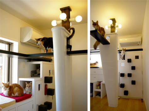 cat friendly home design the cats house 猫の家 pet project