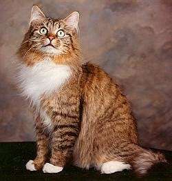 what breed is best for me quiz what cat breed is best for you quiz quiz at quiztron