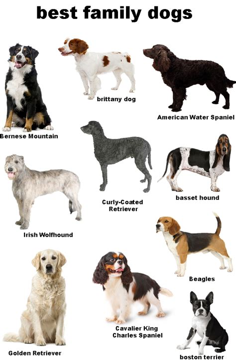 best family families best breeds best breeds for families pets4homes 10 best breeds