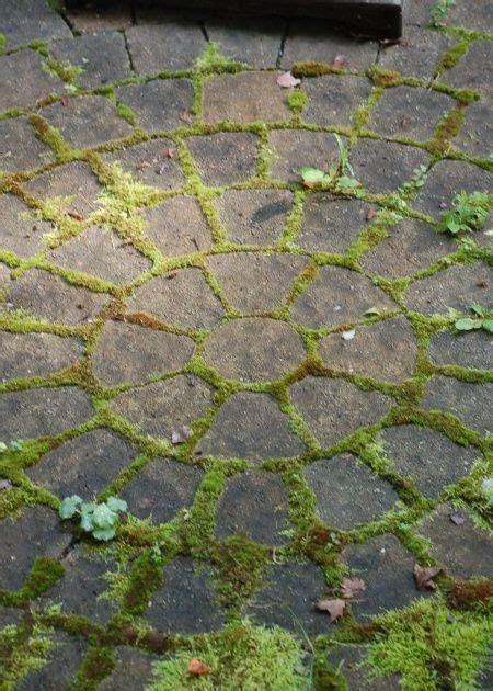 gardeningattheadore moss between pavers