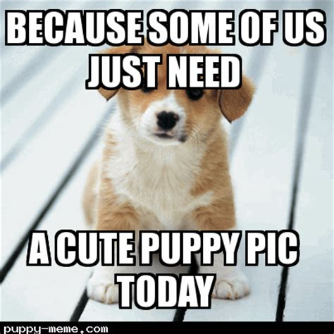 Cute Puppies Memes - need cute puppy today