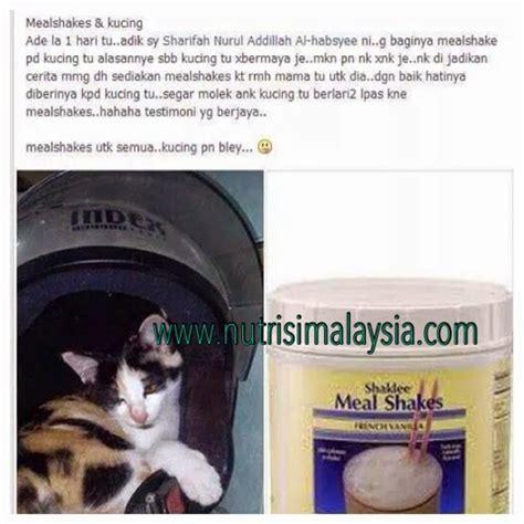 makanan rumah untuk anak kucing makanan untuk kucing yang sakit agar kembali ceria