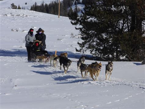 sled names wyoming inn names jackson sled country with new sled touring package and