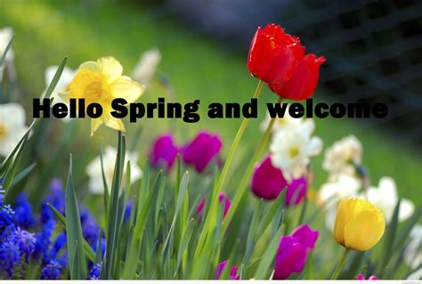 what is spring hello spring