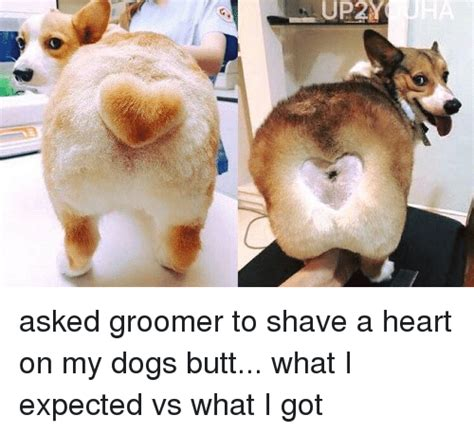 how to shave a heart 25 best memes about dog butt dog butt memes